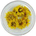 Sárga szárított virágok