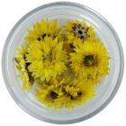 Szárított virág – sárga színű